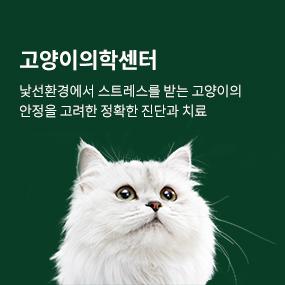 고양이의학센터